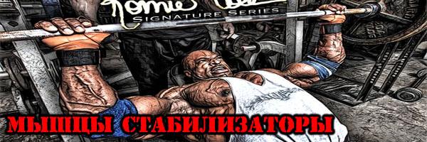 Мышцы-Стабилизаторы