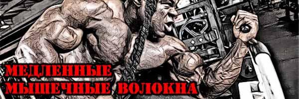 РОСТ Медленных Мышечных Волокон - Денис Борисов