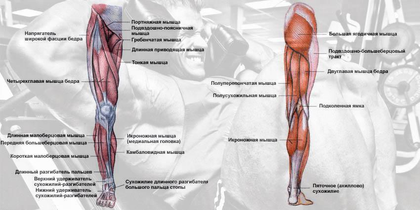 Эти большие куски мышц