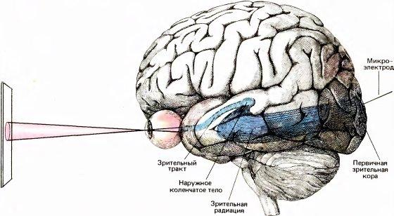 Наш мозг - удивительная штука.  Человеческий мозг - самая сложная вещь, в этом мире.