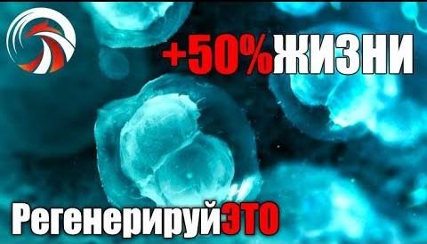 Plug-In +50% к Жизни. Как Перезагрузить Стволовые Клетки - Денис Борисов