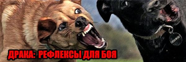 ДРАКА: Рефлексы Для Боя - Денис Борисов